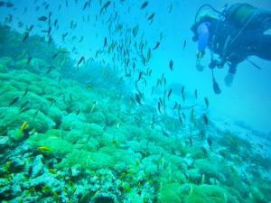 צלילה במנמבה - צילום : דניאל קליין