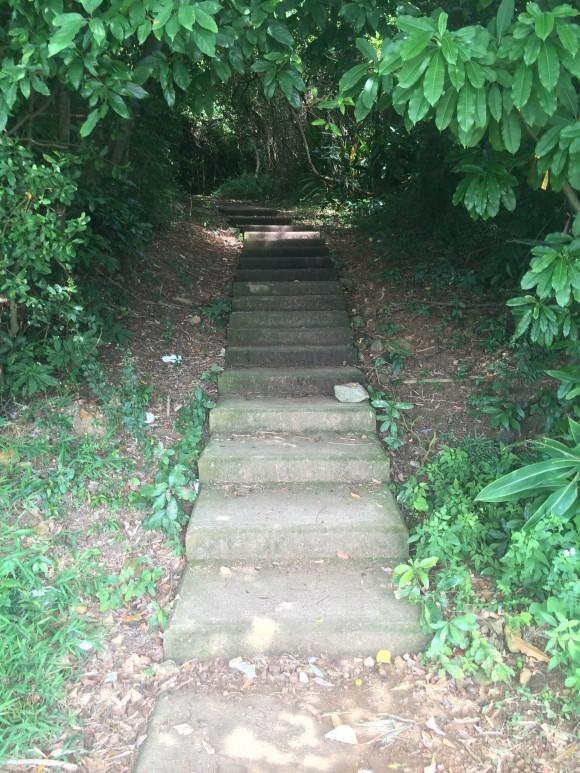 המדרגות הנכונות. צילום: תום לב