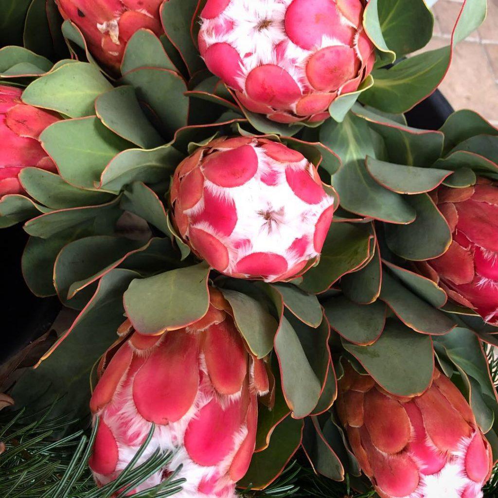 שוק הפרחים. צילום: עינב דורון