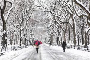סנטרל פארק בחורף. צילום: Shutterstock