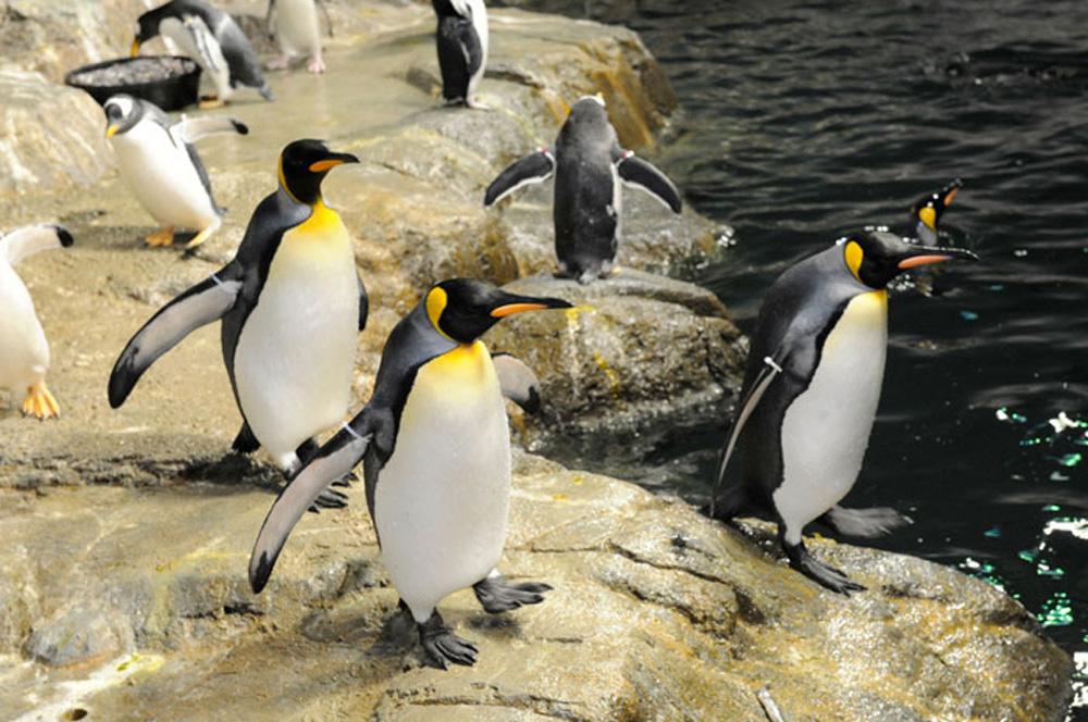 Penguins by Julie Larsen