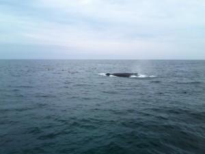 שיט בין לוויתנים, חוויה שאסור לפספס. צילום: נועה חכים